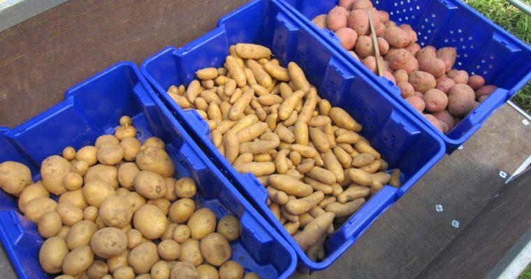 Пластиковые корзины для хранения фруктов и овощей